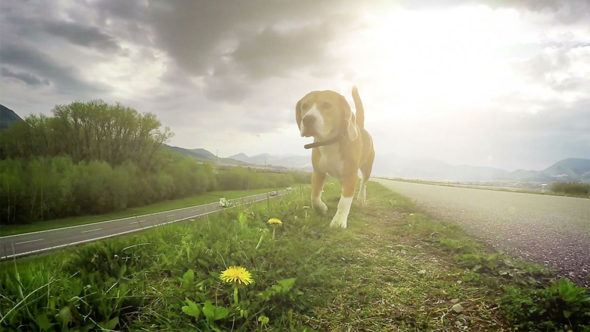 CarBeagle - We sniff out a better deal for your car