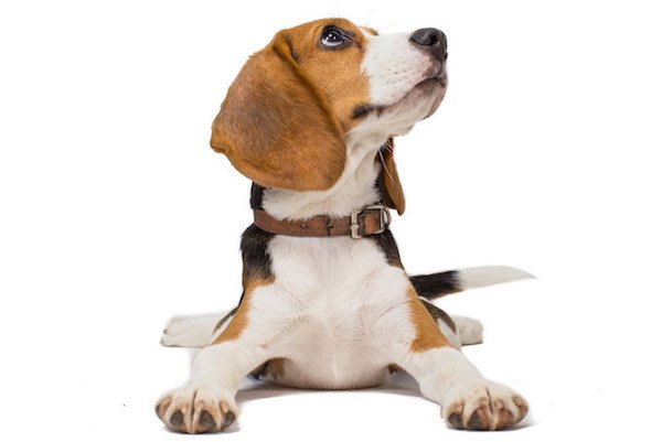 CarBeagle - We sniff out the best deal for your next car